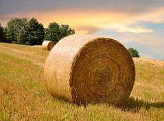 Strohrder (Mariandl48) Tags: strohballen getreidefeld natur bume himmel sommersgut wenigzell steiermark austria