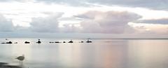 Baltic Sea long exposure (kalakeli) Tags: grmitz balticsea ostsee longexposure le langzeitbelichtung wasser meer birds vgel mwen gulls 15secs nd ndfilter nd30 nd1000