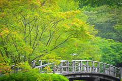 Hasselt - 04 aout 2016- 11 (Thierry Valdin) Tags: jardinjaponais japon hasselt parc belgique tuin japanesetuin belge valndereen flandre