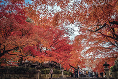 DSC_2922 (juor2) Tags: red under maple  d750 nikon scene japan kyoto temple overcast