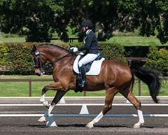 160911_NSW_D_Champs_Medium_5181.jpg (FranzVenhaus) Tags: championships athletes siec dressage newsouthwales australia equestrian riders horses performance event competition nsw sydney aus