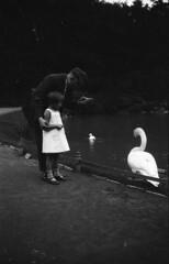 One swan (Arne Kuilman) Tags: ldenscheid maxmller photo photonotmine blackandwhite germany duitsland 1940 forties family photography scan v600 epson negatives found gevonden lostandfound swan zwaan
