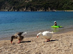 Two ducks and one green turtle. (panoskaralis) Tags: beach tarti sea seaside bluesky bluesea shore coast swimm swimming child ducks birds lesvos lesbos lesvosisland mytilene greece greek hellas hellenic nature summer greeksummer summerholidays holidays aegeansea