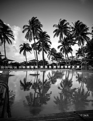 waiting tourists (Jack_from_Paris) Tags: l2000449bw leica m type 240 10770 leicasummicronm35mmf2asph 11879 dng mode lightroom capture nx2 rangefinder tlmtrique bw noiretblanc monochrom wide angle guadeloupe gwada piscine swimming pool reflet palmiers palm tree morning light