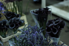 Rungis - March aux fleurs (marie-adeline.rothenburger) Tags: rungis march fleurs