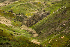 'An Absence of Sheep' (Canadapt) Tags: ravine hillside slope valley grass rocks bush cabodaroca portugal canadapt