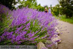 PLW_5574 (Laszlo Perger) Tags: wien vienna sterreich austria blumengarten hirschstetten flowergarden