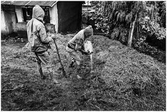 Mixing of straw and clay for the building of a mud house. (Luc V. de Zeeuw) Tags: clay ethiopia house mud spade straw debark amhara