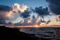 Cumulus Sunrise (Daniel Ray) Tags: animal bird galveston seabrook bay gully park pine sunrise