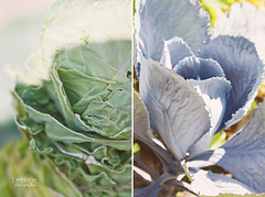 I will eat all my vegetables.... (Helaine37) Tags: light colors vegetables garden botanical pastel dippy