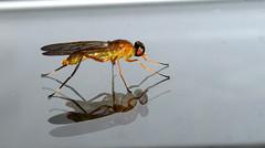 Caminando sobre si (Papa Pic) Tags: macro mug insecto