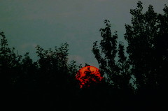 Red sun (Peggy2012CREATIVELENZ) Tags: trees sunset red sky sun canada black silhouettes alberta bluebirdestates peggy2012creativelenz p1220369a