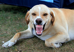 Dog Smile Teeth Dog Ontario Smile Teeth