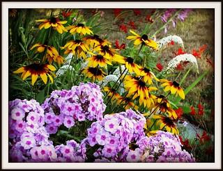 Across the Flower Garden