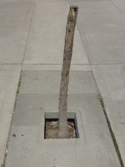kind of like a tree (maartje jaquet) Tags: toronto canada foundsculpture dirtylooks sculpturetrouve stadstuincitygarden