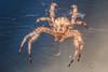 Just a spider (janusz l) Tags: macro garden spider eyes web front tamron90mm janusz leszczynski 124910 8192012