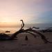 Driftwood Beach 11