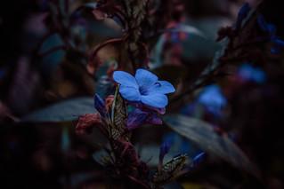 #329 of 365 days - blue