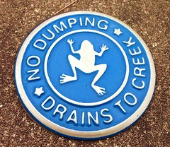 frog creeped by creek dumping (fxb81 harley davidson) Tags: warning flat frog creek water eco protect careful pollute donot oneworld earth dump oil