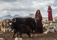Wakhi nomad women milking yaks, Big pamir, Wakhan, Afghanistan (Eric Lafforgue) Tags: adultsonly afghan224 afghanistan altitude animal anthropolgy badakhshan bigpamir bosgrunniens centralasia colourimage community cultures day fullframe headscarf horizontal horned indigenousculture ismaili landscape lifestyles livestock lookingatcamera malongzan mountain mountainrange nature nomad nomadicpeople outdoors pamirmountains people photography red scenery stone tourism traditionalclothing transportation traveldestinations twopeople veil wakhancorridor wakhi wilderness women womenonly workinganimals yak wakhan pamir