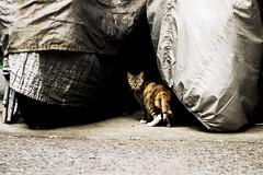 neko-neko1490 (kuro-gin) Tags: cat cats animal japan snap street straycat
