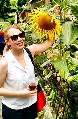 giant sunflower (ekelly80) Tags: newyork newyorkcity nyc brooklyn august2016 summer walk street flower sunflower yellow giant