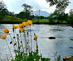 River Teith Callander (Pauline Deas) Tags: river teith callander trossachs ben ledi yellow water flowers floral outdoors