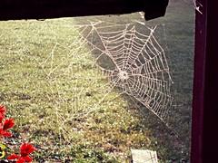 Pajęczyna (mojenowosiolki) Tags: nowosiolki zamojszczyzna autumn spider lubelszczyzna jesien