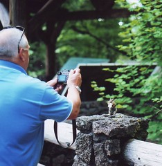 20070721 (61f) - Oregon, Sahalie Falls - golden-mantled ground squirrel (sienel) Tags: 2007 oregon sahaliefalls nationalforest willamettenationalforest goldenmantledgroundsquirrel groundsquirrel paparazzi