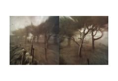 East of Dreemlang iii (mark kinrade) Tags: manx manxlandscape diptych mist copse atmospheric dreemlang kinrade
