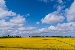 Infinite Country (bobbybee2000) Tags: fujix100 bluesky light sun land clouds wolken blauerhimmel licht raps colors blue yellow landschaft landscape landschaftsfotografie