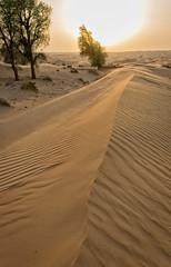 Sand dunes (Tigra K) Tags: dubai unitedarabemirates ae 2013 color landscape mountain nature plant shape tree pattern