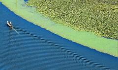 Skadar Lake (DarioRavasio) Tags: prijestonicacetinje skadar lake waterlilies montenegro