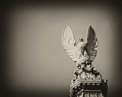 Federal Eagle (macsparky) Tags: newyork blackwhite unitedstates eagle financialdistrict copper williamstreet wallstreet 1929 statute bankofnewyork antiqueplate federaleagle 48wallstreet canonef100400f4556lisusm benjaminwistarmorris canoneos7d silverefx2