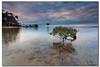 Mangrove Tree (danishpm) Tags: sea seascape beach clouds sunrise canon sand rocks australia wideangle qld queensland aus 1020mm sigmalens eos450d dragondaggeraward sorenmartensen hitechgradfilters 09ndreversegradfilter