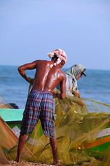(Poorfish) Tags: sea man fisherman sweat srilanka ceylon shoulder fishmarket westernprovince fishingnet negombo  flickraward