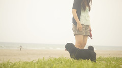 ながめる (Pug_nametaro) Tags: dog pug everyday pugs 犬 puglove パグ blackpug 黒パグ