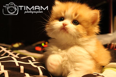 """IMG_0173 (""""Timam"""") Tags:"""