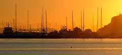 Golden (Mike Brebner) Tags: morning sea newzealand sun seascape water sunrise dawn early view harbour auckland nz vista allrightsreserved 2012 flickersbest c2012mikebrebner