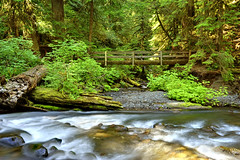 Silent Energy of Nature (Ireena Eleonora Worthy) Tags: bridge sun nature water beautiful landscape washington stream awesome wa top10 olympicnationalpark northernstraitsphotography