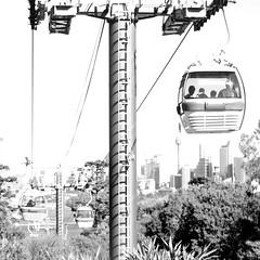 Sky Safari (burtondavid) Tags: park city trees sky blackandwhite bw white black car contrast zoo ride hill transport sydney australia cable pole safari nsw punch uphill taronga smcpentaxda55mmf14sdm
