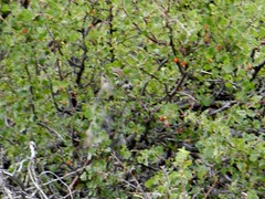 DAY 6 Harvard City Riding Stables-Chalk Creek-Hancock Pass 7-24-2012 (93) (kimek1968) Tags: mountains jeep marmot wildflowers treeline stelmo chipmunks chalkcreek jeeptrails anniebelle harvardcityridingstableschalkcreekhancockpass anniebellemine
