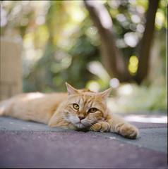 ° (333Bracket) Tags: 120 6x6 film cat mediumformat haifa fujixtra400 333bracket thecatwhoturnedonandoff bronicasqbzenzanonps80mmf28