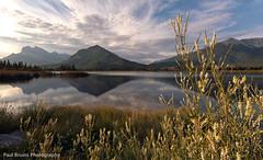 Vermilion Lake Summer Growth (Panorama Paul) Tags: canada alberta banffnationalpark vermilionlake sigmalenses nikfilters neverhdr nikond300 paulbruinsphotography croporama