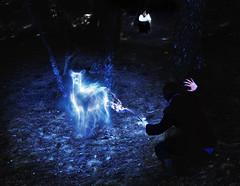 Always (Marina_Monaco) Tags: portrait night forest self woods wand magic harry potter doe spells patronus expecto patronum
