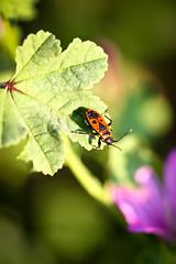(Davide Leo) Tags: flower macro canon insect sigma natura apo 28 dg 150mm hsm davideleoit