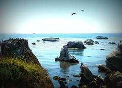 Pelicans at Pismo Beach, CA (Lynn's Lens) Tags: california beach pelicans pelican pismobeach margododdpark