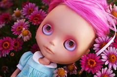 the daisy fields