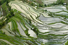 CHINA (BoazImages) Tags: china travel nature water trek landscape asian outdoors landscapes scenery asia view paddy hiking chinese scenic aerial hike crop southeast yunnan birdseye yuanyang boazimages