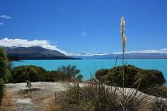Auraki Mt Cook and Lake Pukaki (Albert Freeman) Tags: newzealand lake grass landscape bluesky stunning mtcook southisland bluelake breathtaking lakepukaki 2012 mountcook glaciallake rockflour auraki